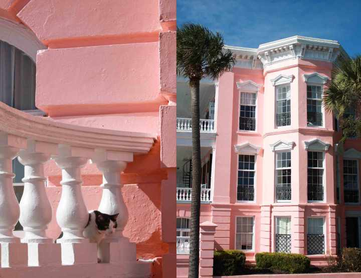 cat-and-pinkhouse
