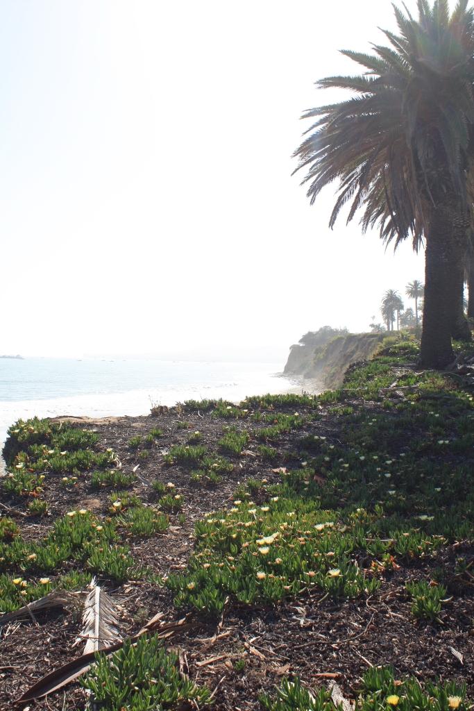 beach-shot2