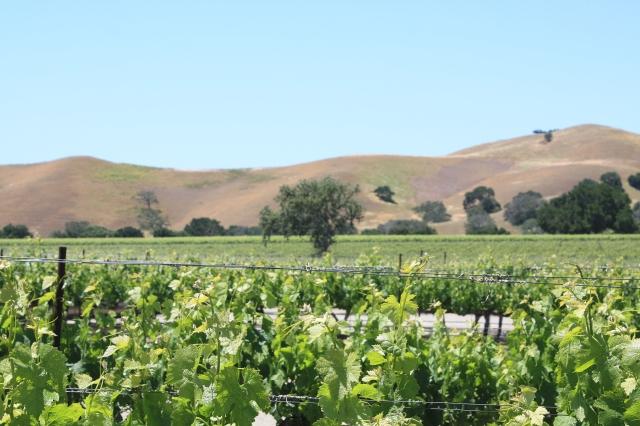 firestone-winery2