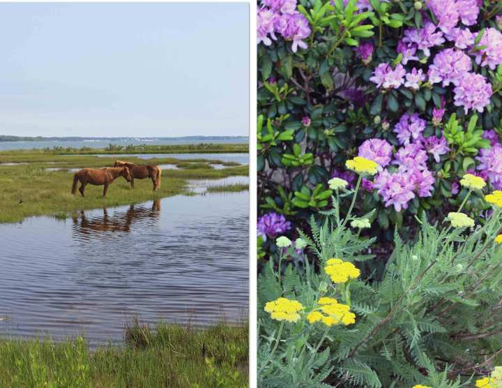 assateague-island-district-hi-lo