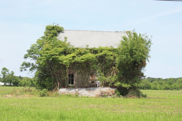 overgrown-house